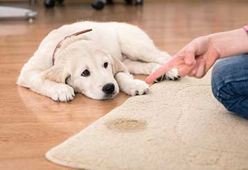 Pet Stain Removal | Canyon Country