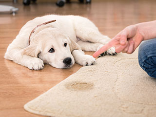Pet Stain Removal | Canyon Country Carpet Cleaning